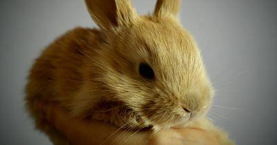 Lehrer tötet vor den Augen seiner Schüler ein Kaninchen