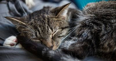 Diese Katze ist ganz schön frech!