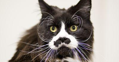 Darum sind Katzen so wählerisch bei ihrem Futter!
