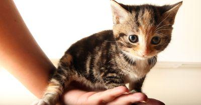 Eine gute Nachricht für alle Katzenliebhaber!