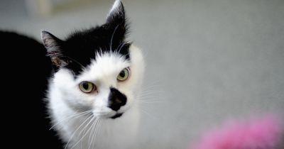 Diese Katze hat einen ganz besonderen Verehrer!