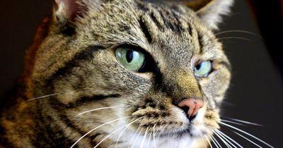Woran du merkst, dass deine Katze beleidigt ist