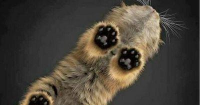 Die lustigste Sicht auf deine Katze - via Glasplatte