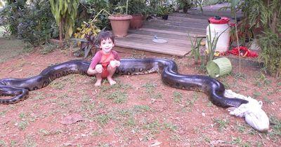 Anaconda - Die größte Schlange der Welt