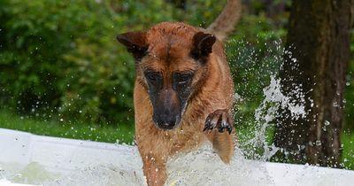 Wenn Hund ein Bad nimmt