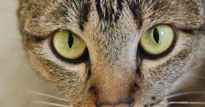 Katzen lieben Tablets fast so sehr wie wir