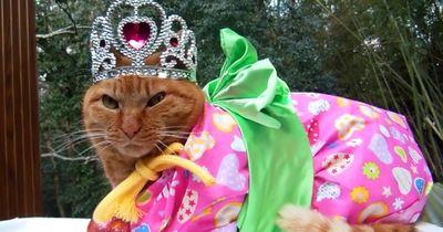 Katzen im Kimono sind Trend in Japan!