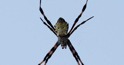 Warum haben wir eigentlich Angst vor Spinnen?