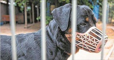 Todesstrafe für den Rottweiler?