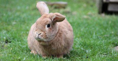 Diese süßen Tiere machen absolut eklige Sachen!