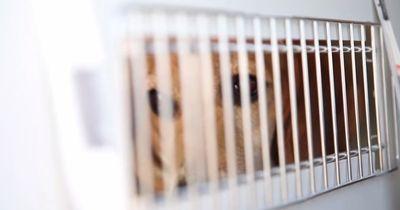 Nach jahrelanger Quälerei beginnt für diese Hunde ein neues Leben