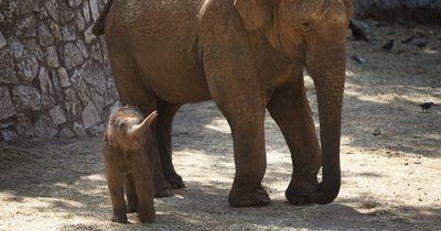 Der kleine Elefant, der von seiner Mutter verstoßen wurde...