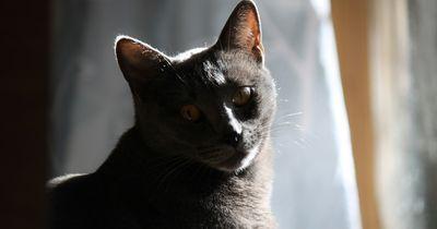 6 Anzeichen, dass deine Katze dich töten will!