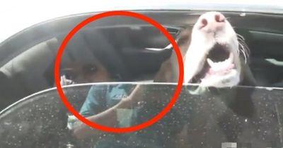 Passantin rettet zwei Hunde bei sengender Hitze aus einem fremden Auto