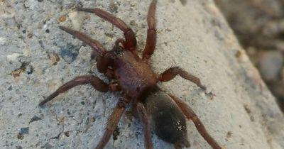 Diesen Spinnenarten willst du niemals begegnen