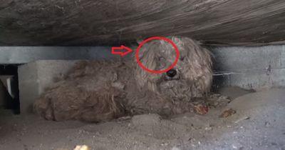 Sein Besitzer starb vor einem Jahr - einsam wartete er tapfer!