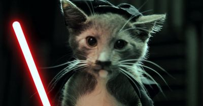 Katze, Hund & Co. goes Star Wars