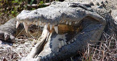Krokodil als Haustier - Verrückt, oder?