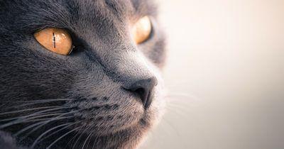 7 lustige und kuriose Fakten über Katzen!