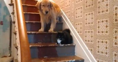 Diese Hunde haben Angst, an den Katzen vorbeizugehen!