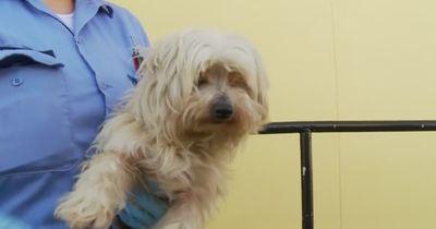 Ein Makeover rettete diesem Hund das Leben!