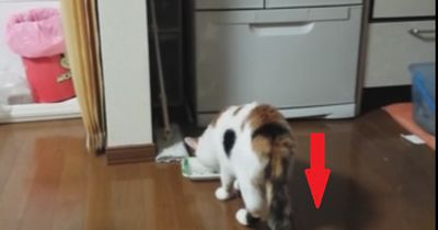 Die Katze bekommt den Schreck ihres Lebens!