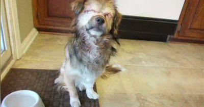 Dieser Hund hat sein Augenlicht verloren