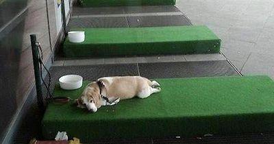 Genial! Ikea baut eigene Hundestation, damit Hunde nicht im Auto gelassen werden