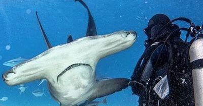 Wie verhalte ich mich bei einer Haiattacke?