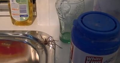 Spinne in der Küche - Hast du Angst?