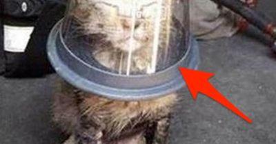 Er stülpt der Katze einen Becher über den Kopf und ALLE schauen dabei zu ...