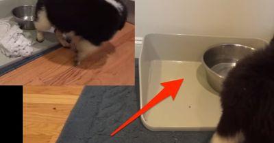 Was hat dieser Welpe vor?? Mit DIESEM VIDEO wird der Hund zum Youtubestar!