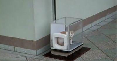 Eine Katze in der Glaskiste