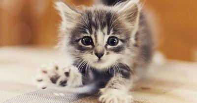 8 niedliche Kätzchen, die man unbedingt gesehen haben muss