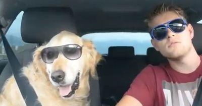 Lustige Hunde in Aktion