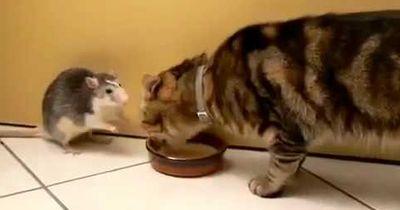 Katz und Maus sind nicht immer spinnefeind