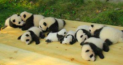 Dieser chinesische Kindergarten hat einen ganz besonderen Auftrag!