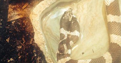 5 krasse Fakten über Schlangen