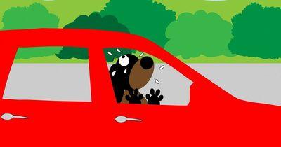 Hund im Auto - Darf man die Scheibe einschlagen?