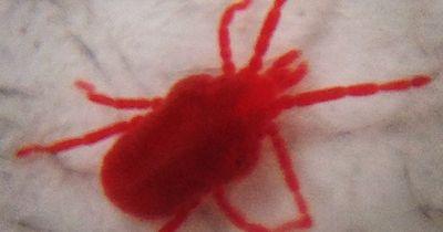 Eklige Tiere, die in deinem Bett leben könnten!