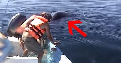 Unglaubliche Rettung eines Buckelwals