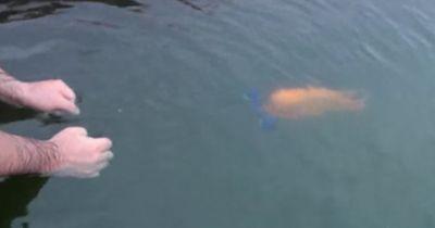 Unglaublich: Fisch verhält sich wie ein Hund!