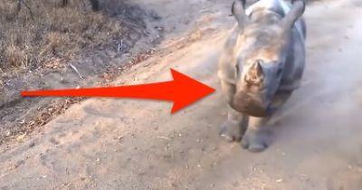 Unglaublich: Dieses Nilpferd steckt eindeutig im falschen Körper