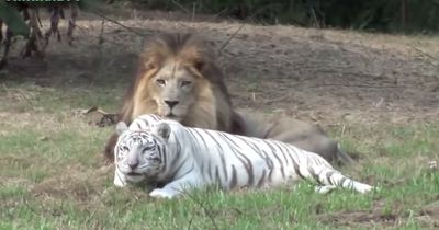 Die schönsten Tierfreundschaften aller Zeiten!