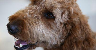 5 Gründe, warum das Tätowieren von Tieren weltweit verboten werden muss