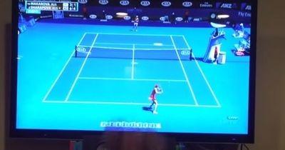 Australien Open - alle gucken Tennis, doch dieser Hund rastet aus