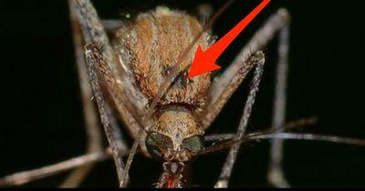 Was tun, wenn's juckt und kratzt? Schnelle Hilfe nach dem Mückenstich.