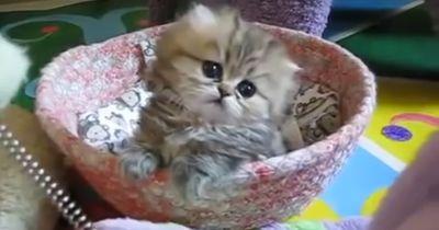 Die süßesten Kätzchen der Welt!