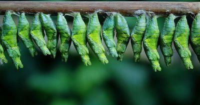 Mit diesen Pflanzen lockst du dir Schmetterlinge in den Garten