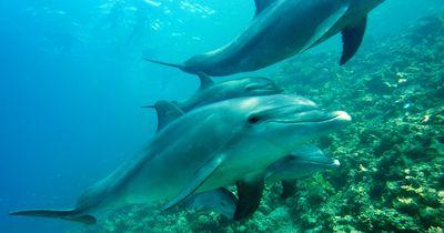 5 krasse Fakten über Delfine
